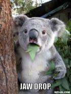 koala-meme-generator-jaw-drop-0fa4b6_zps220175c4